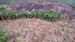 Operação da Semad investiga desmatamentos irregulares no Nordeste do Estado