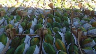 Produtores do Projeto Jaíba fornecem frutas, legumes e doces para escolas estaduais de Belo Horizonte