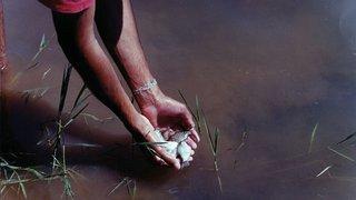 Peixe Vivo conquista prêmio pela preservação da fauna dos rios
