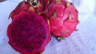 Produtores do Sul de Minas apostam na produção da 'fruta dragão'