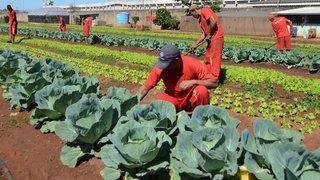 Presídio na cidade de Uberlândia produz alimentos e roupas