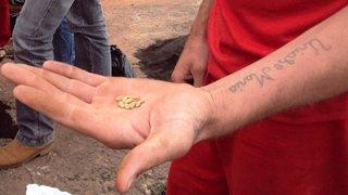 Zona rural de Passos será reflorestada com mudas cultivadas por presos