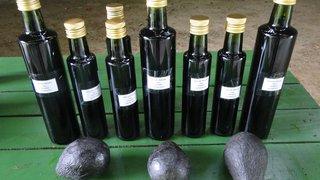 Óleo de abacate começa a ser produzido no Sul do estado